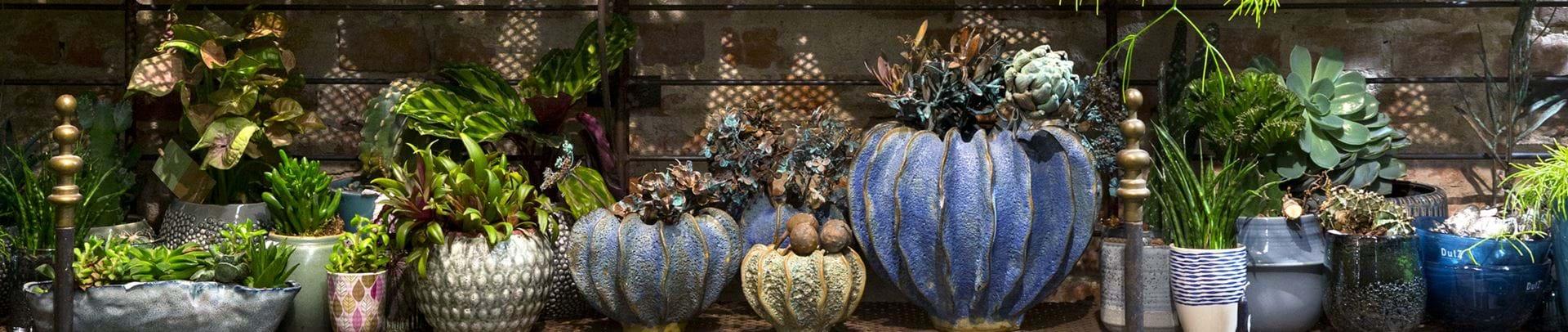 Hylde med potteplanter og urtepotteskjulere i grøne og blå nuancer