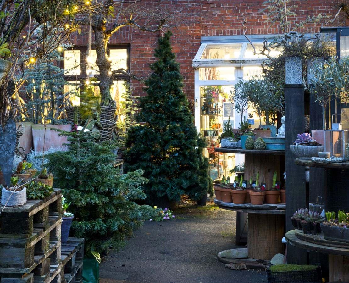 Udendørs areal fyldt med grantræer, planter og dekorationer og kig til vinduer ind til butikken